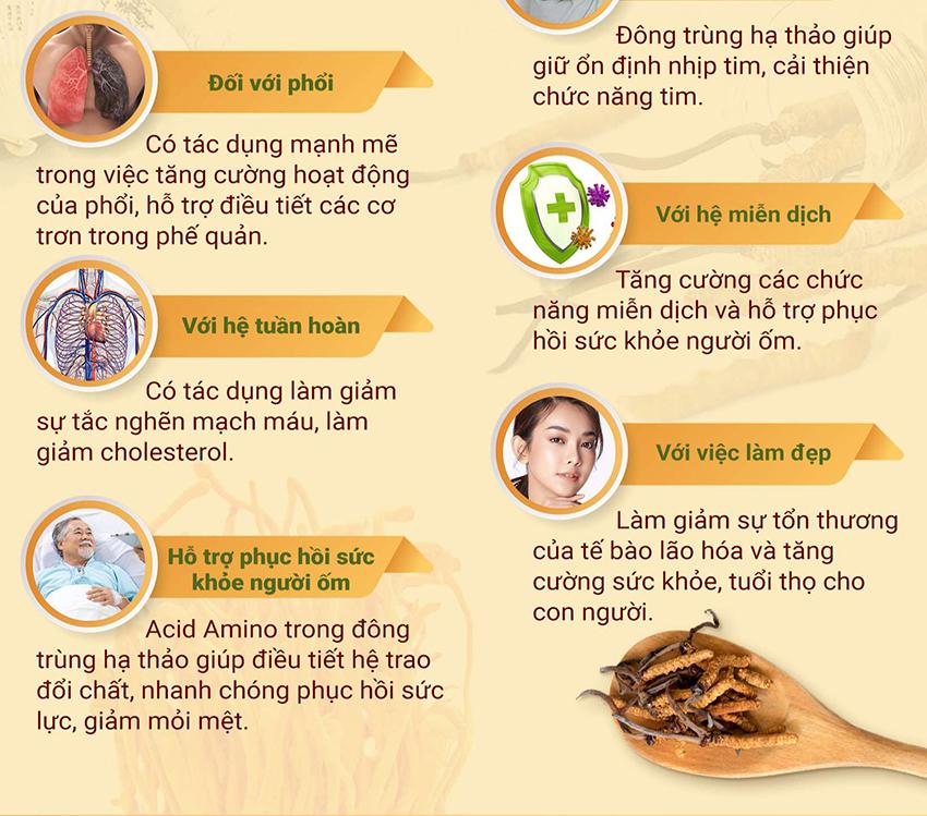 10 tác dụng của đông trùng hạ thảo Tây Tạng đối với sức khỏe