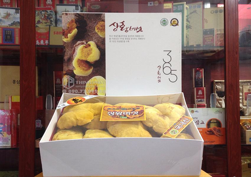 Nấm Thượng Hoàng Hàn Quốc 365 hộp quà tặng 1kg