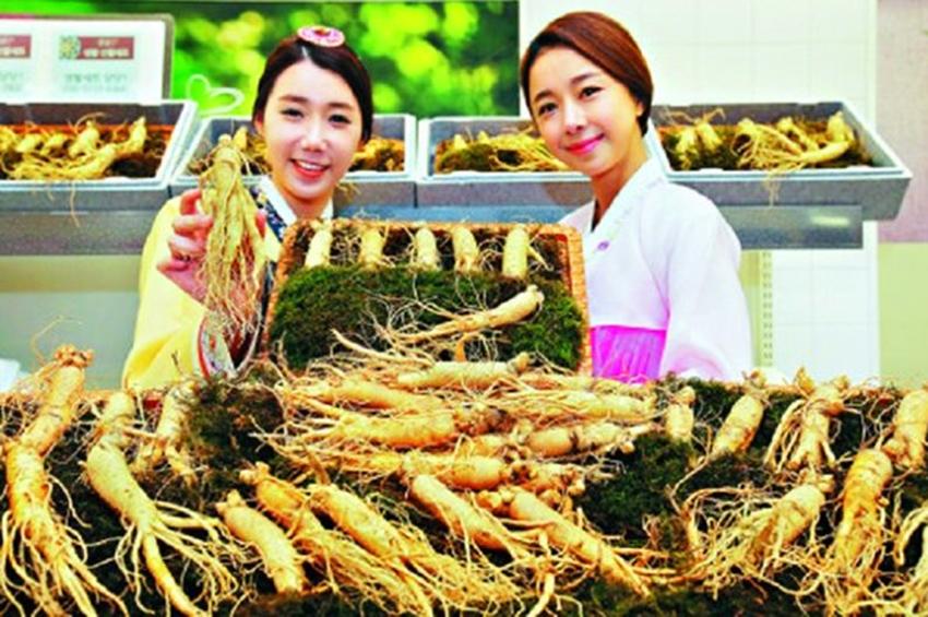 Nhân sâm tươi Hàn Quốc