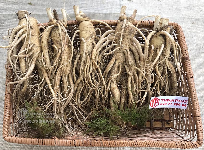 Nhân sâm tươi Hàn Quốc loại 5 củ 1 kg