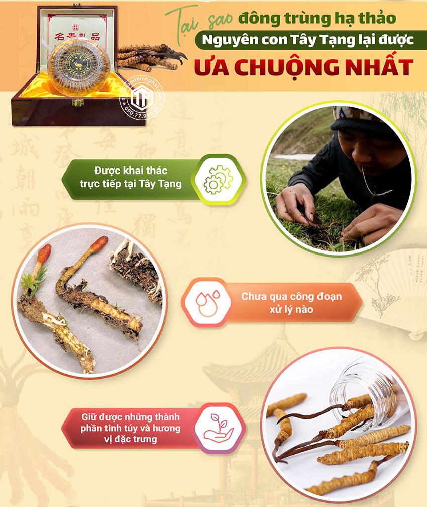Tại sao đông trùng hạ thảo nguyên con Tây Tạng lại được ưa chuộng nhất?