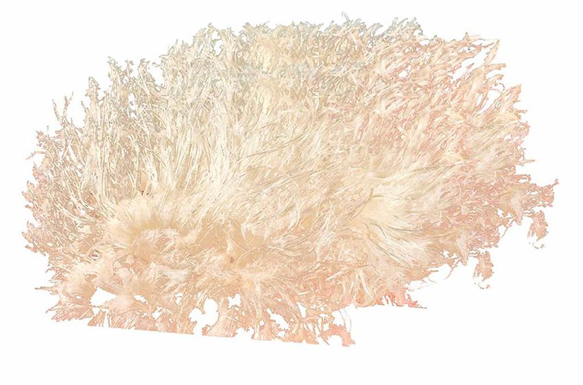 Vi Cá Bông Loại 1-100g