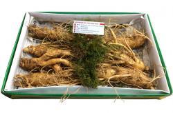 Nhân sâm tươi Hàn Quốc loại 7 củ 1 kg